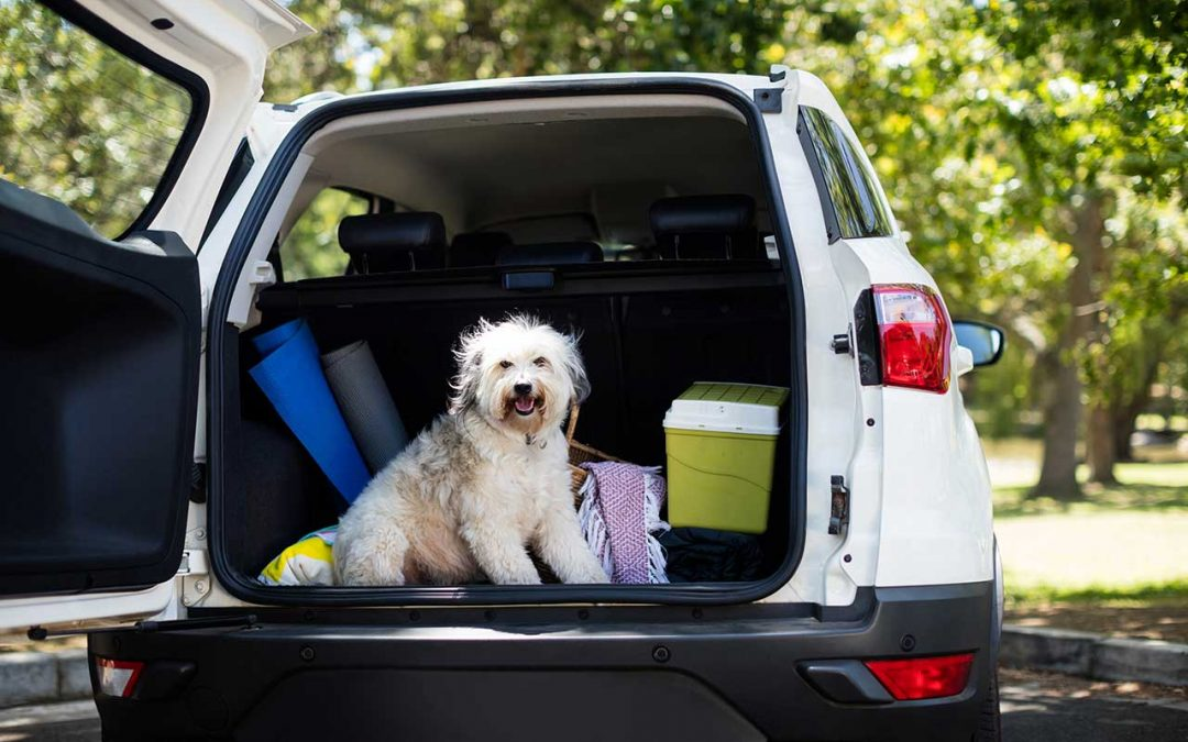 Where to take your pet on holiday